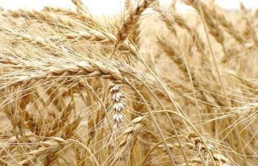 World: FAO pronostica alta producción de cereales en Sudamérica