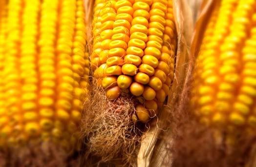 Prezzi cereali, novità dai mercati Usa