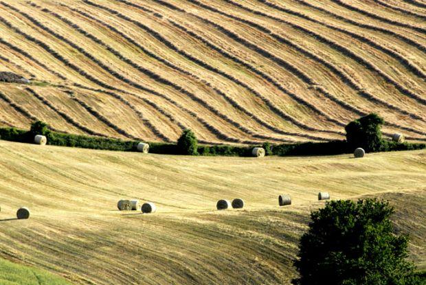 Cereali, le previsioni per il prossimo anno