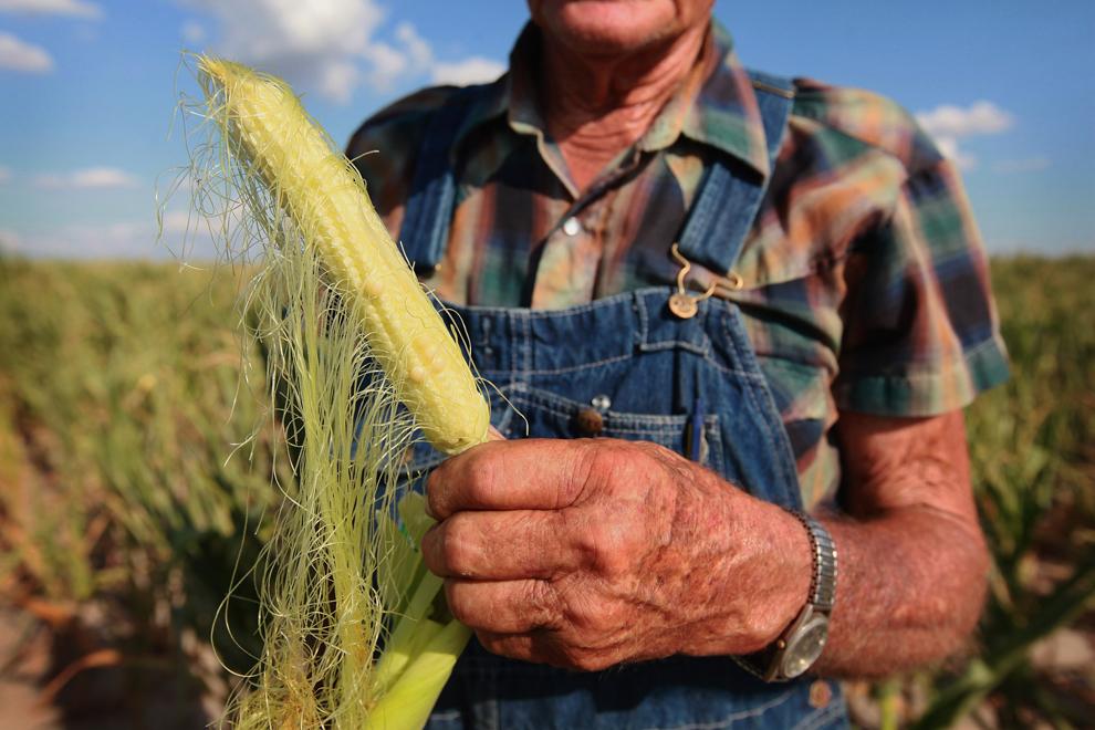 agricoltura notizie