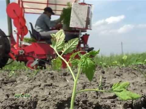 A rilento la campagna del pomodoro in Nord Italia