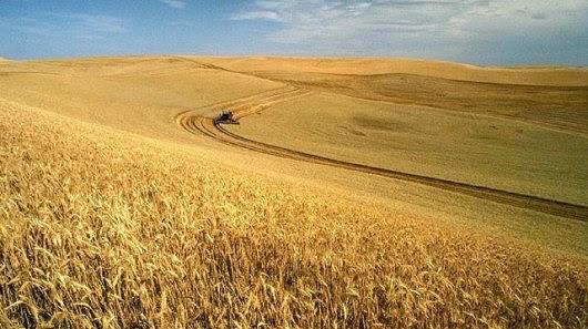 Divieto cereali russi, mercati in tensione