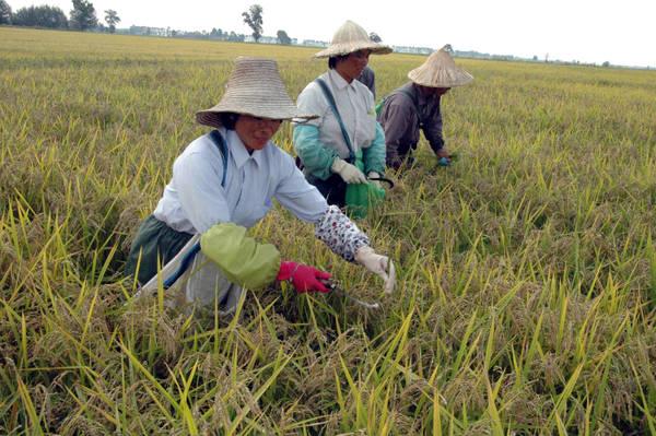 Mercati agricoli, la Cina mette in crisi l'occidente