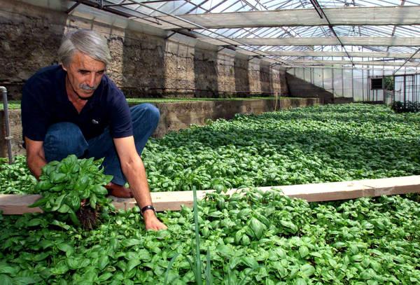 agricoltura italia