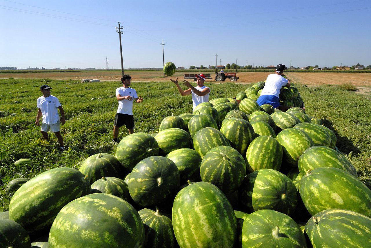 Agricoltura, tornano i voucher: l'annuncio del governo