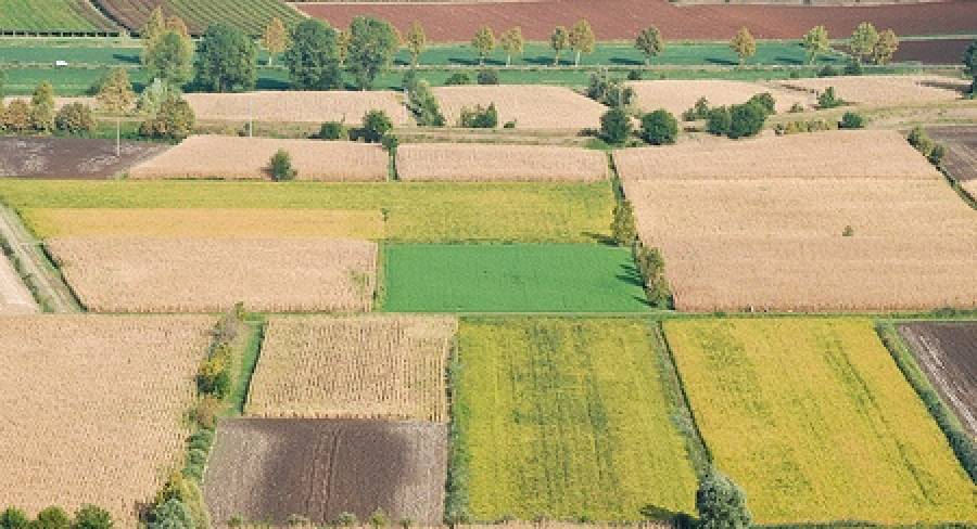 decreto-agricoltura.jpg