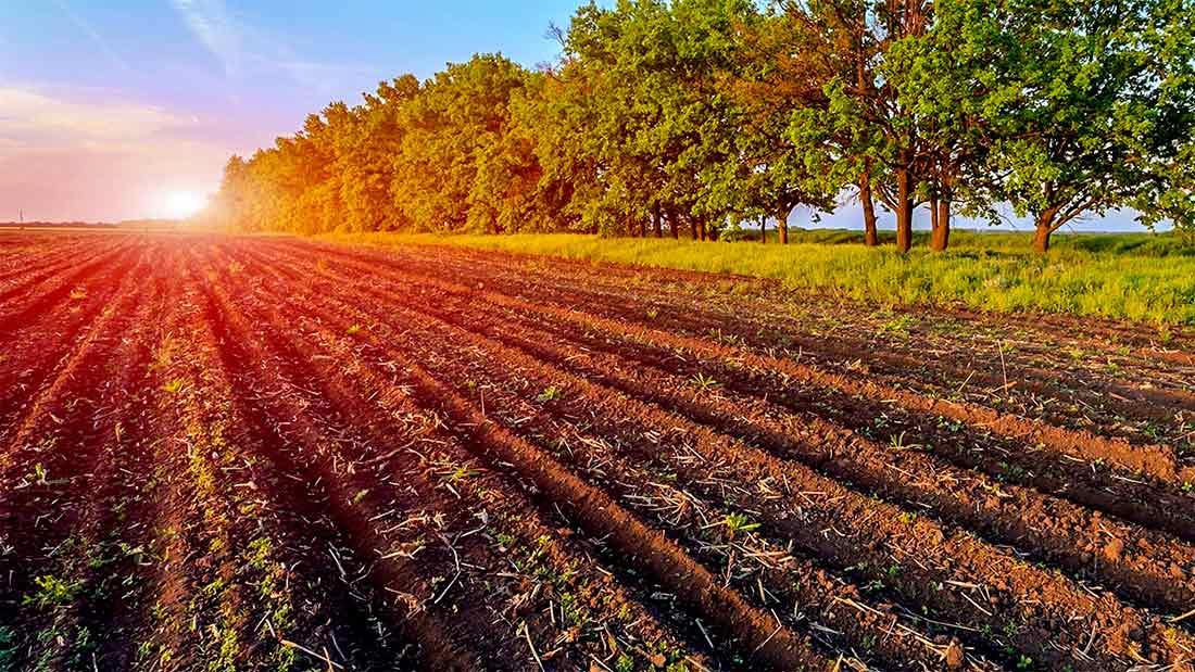 emergenze-Agricoltura.jpg