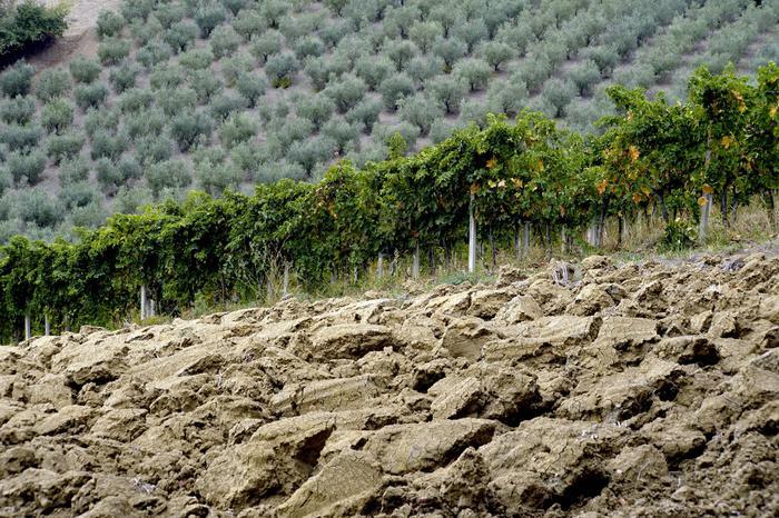 agricoltura-terremoto.jpg
