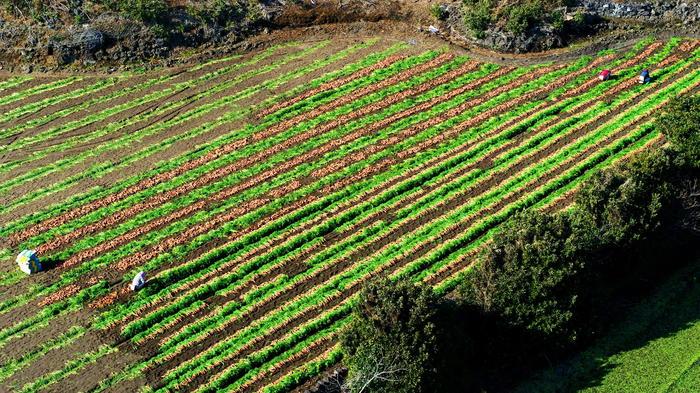agricoltura-precisione-conserve-italia.jpg