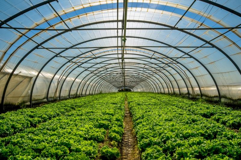 energia-agricoltura.jpg