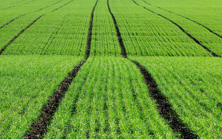 agricoltura-sostenibile-syngenta.jpg