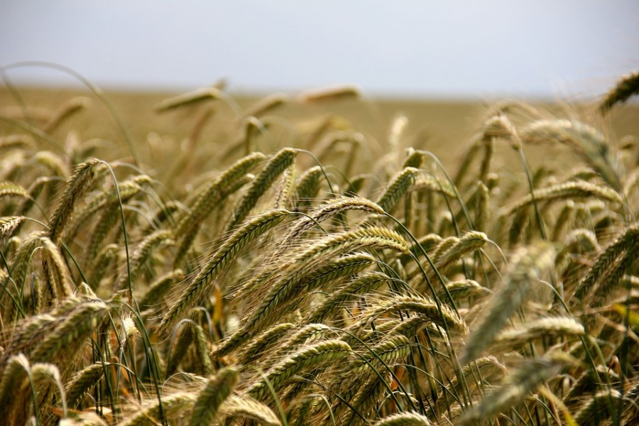 psr-agricoltura.jpg