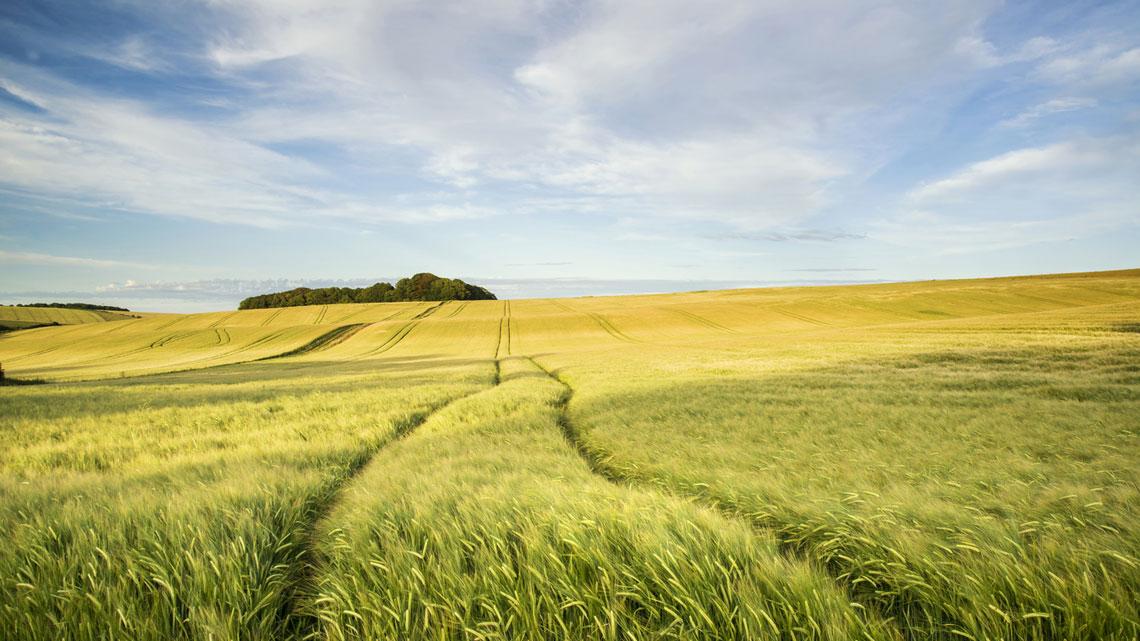 agricoltura-italiana.jpg