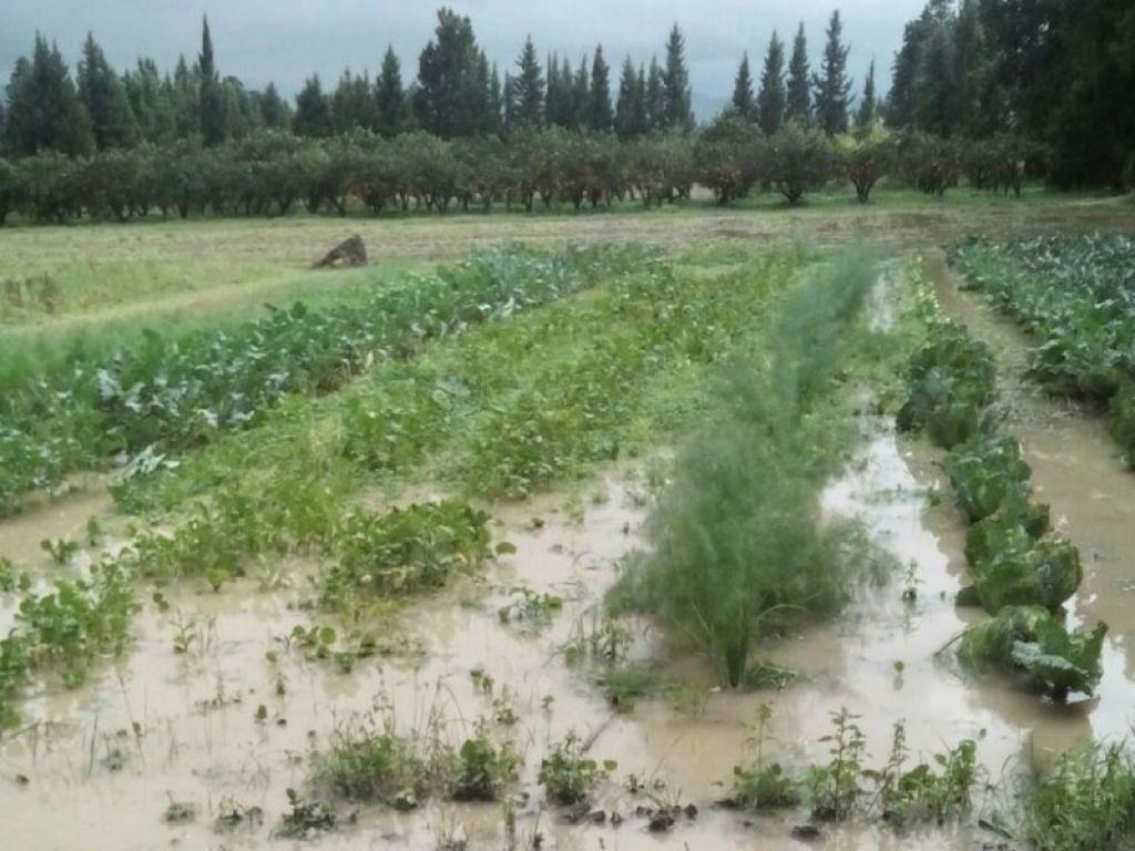 maltempo-agricoltura.jpg