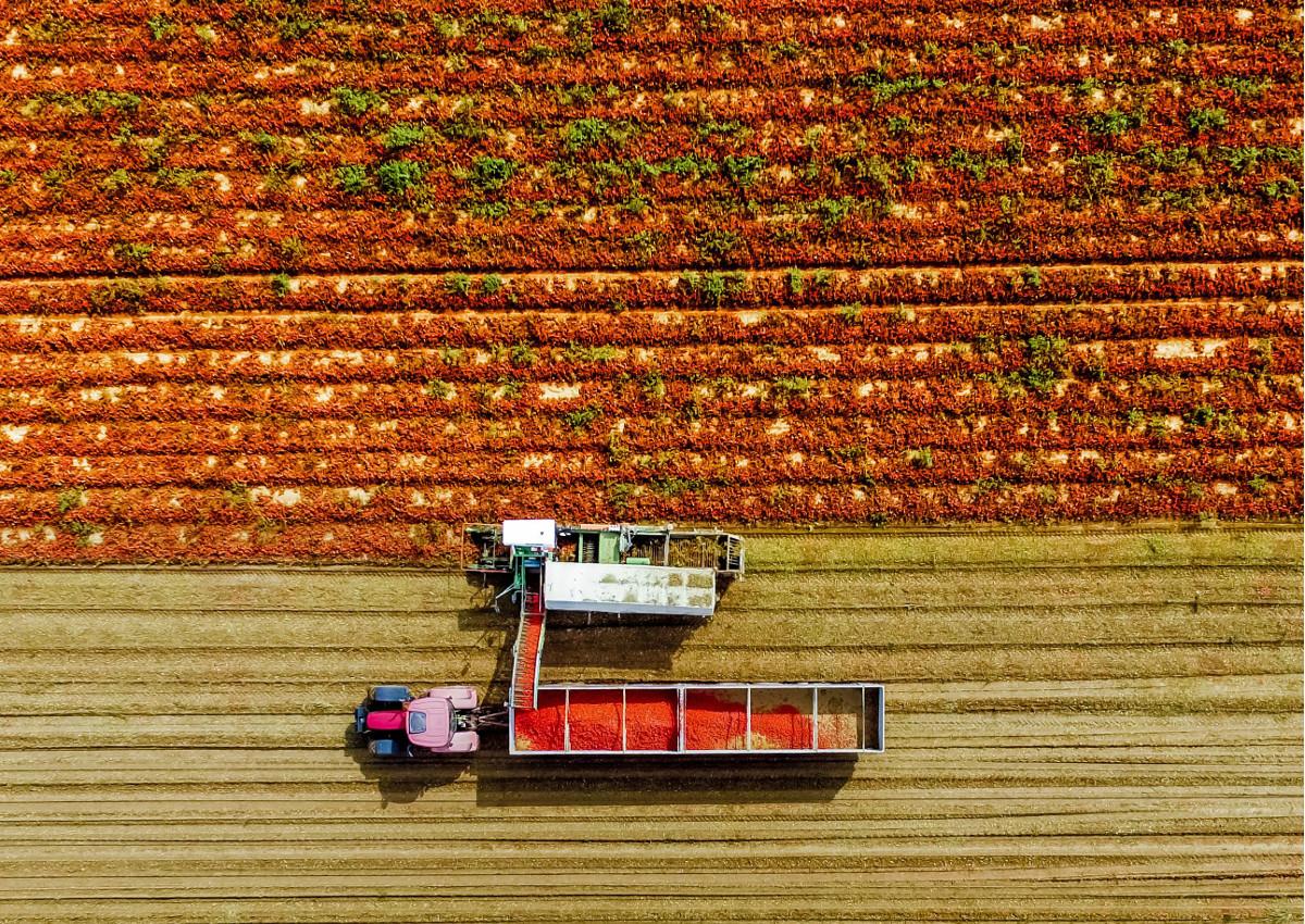 agricoltura-decreto-rilancio.jpg
