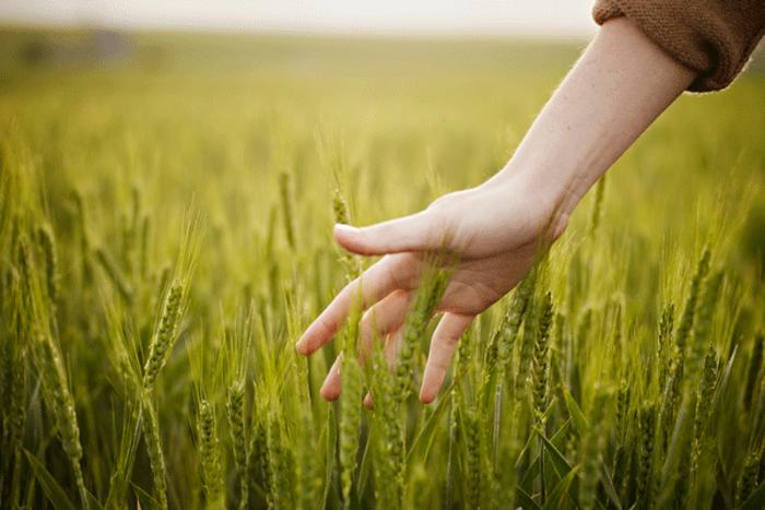 aiuti-ue-agricoltura.jpg