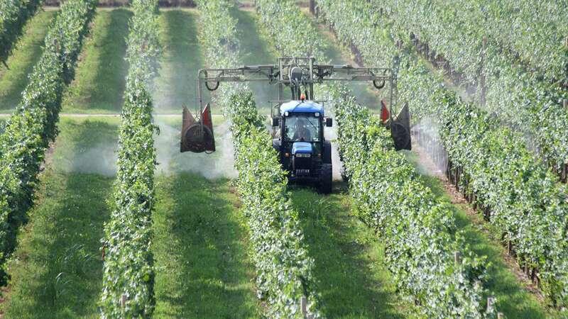 riforma-servizio-fitosanitario-nazionale.jpg
