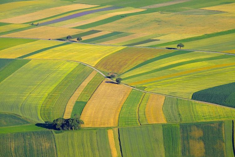terreni-agricoli-ismea-vendita.jpeg