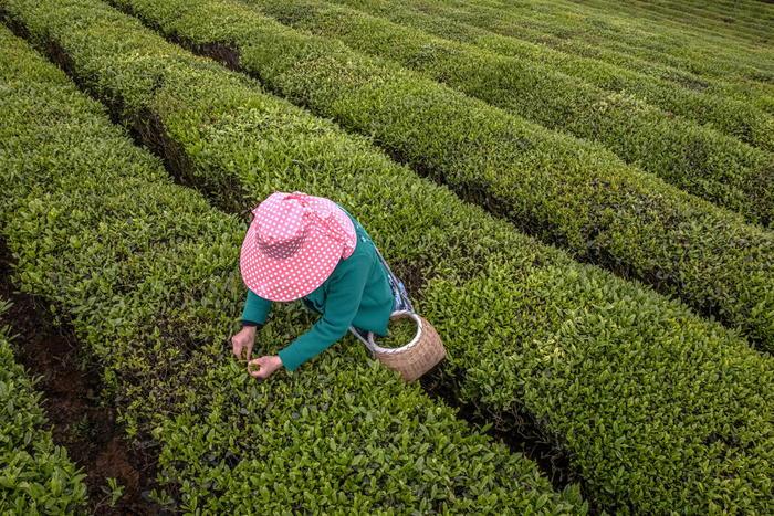agricoltura-agevolazioni-ismea-estese-donne.jpg