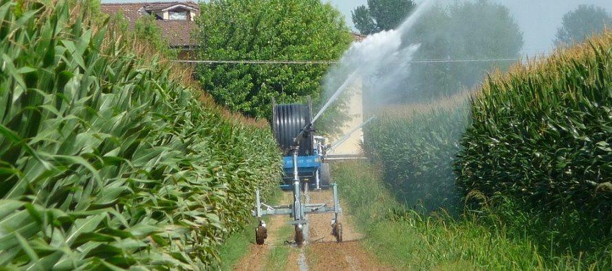 agricoltura-5g-mais-algoritmo.jpg