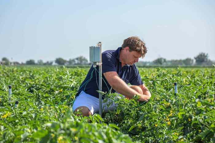 agricoltura-rigenerativa.jpg