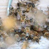 api agricoltura