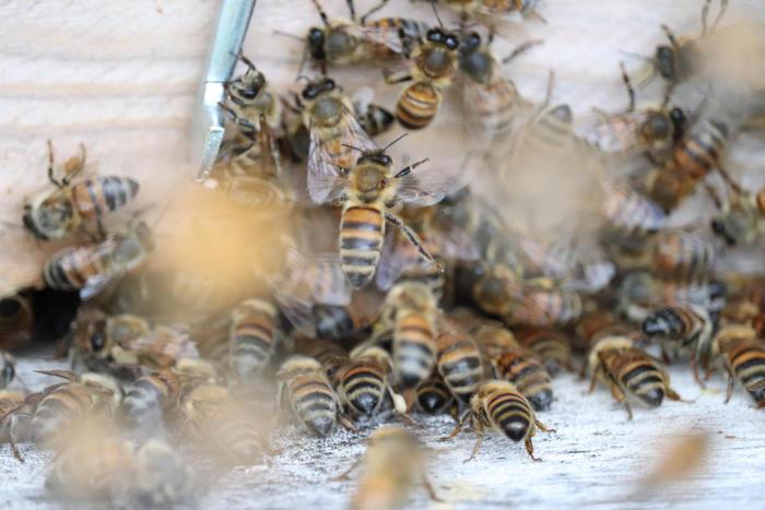api-agricoltura.jpg